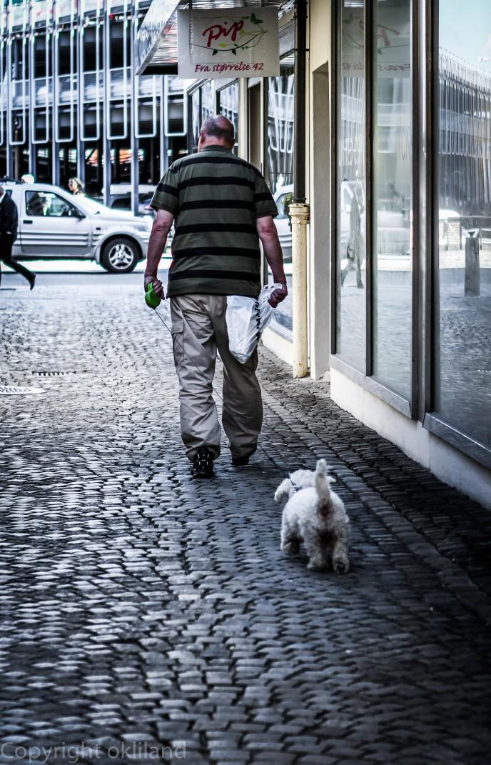 Mann med hund i Stavanger