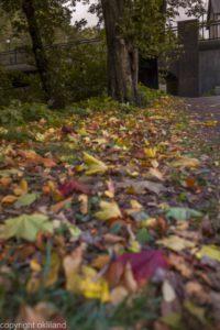 Bilde fargerik høstblader Ørjan Liland